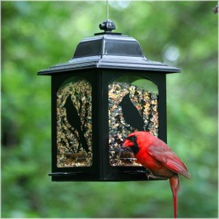 Perky Pet Birds and Berries Lantern Bird Feeder   Bird Feeders